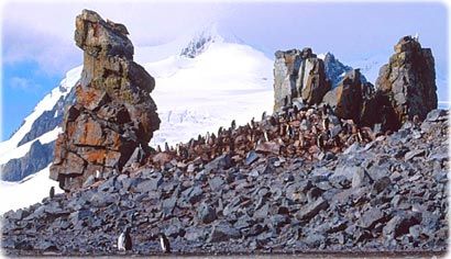 Penguins in Danco Island